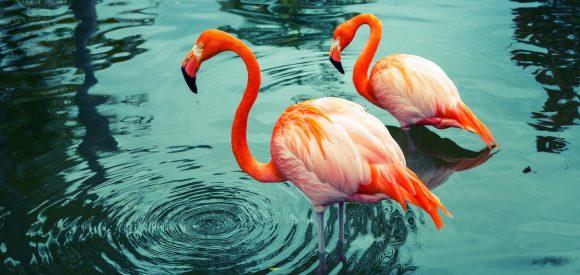 3 redenen waarom de Nederlandse werkprofessional op een flamingo lijkt