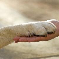 Loyaliteit betekenis geven